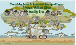 From the Audubon Center for Research Into Endangered Species.