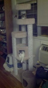 This new piece of furniture in my former bachelor's pad seemed necessary to the happiness of Miltie and Sasha.